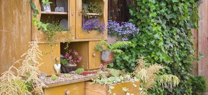 Old cupboard with flowers growing inside it
